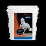 Equinox Muscle Empfohlen bei Muskelaufbau von Pferden (bald erhältlich)