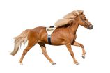 SWIT Power-Belt Horse