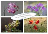 Kartenset Blumen  I