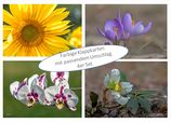 Kartenset Blumen  II