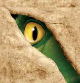 Dinosaurier Servietten klein