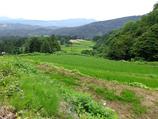 超減農薬栽培米「農林1号」白米5kg 送料込み