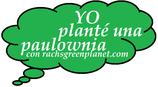 Plantones de paulownias para regalo y plantar