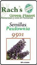 Semillas paulownias tipo Tormentosa 9501