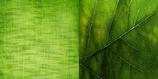 Corso Arcobaleno 3° modulo  Verde oliva  Verde