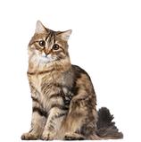 Complet Cat 3 KG