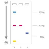 5x DNA Loading Buffer Blue 2 x 1ml BIOLINE BIO-37045