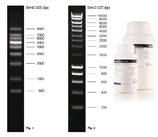 Agarosa Grado Biología Molecular BIOLINE