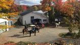Attraction de parc : Randonnée à cheval (env. 20 min.) - Valide avec toute entrée de Grand Parc