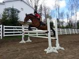Cours d'équitation classique 60min