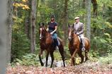 Randonnées équestres sur chevaux de race!