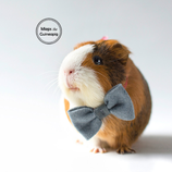 Bow Tie For Guinea Pig - Grey