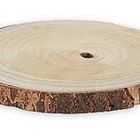 Birken-Holzscheibe