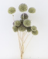 Trockenblume Kugeldistel