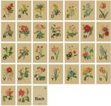 Vintage Sketch Hand Painted Plant Illustration Post Card