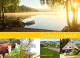 Postkarte SW Streifen gelb