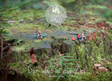 Postkarte SW-Miniatur Baumstamm