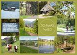 Postkarte SW Dutzend hellgrün