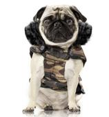 Milk&Pepper Hundeparka Military (Bulldog & Pug Special)