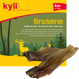 kyli Hirschohren