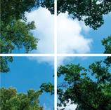 FOTOPRINT afbeelding wolk-bos verdeeld over 4 panelen 595 x 595 mm F60WOLK-BOS4