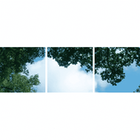 FOTOPRINT afbeelding wolk-bos verdeeld over 3 panelen 595 x 595 mm F60WOLK-BOS3