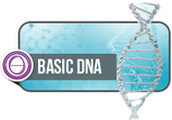 Basic DNA (3 Days)    $500