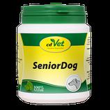 SeniorDog