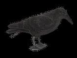 Appelant corbeau floqué