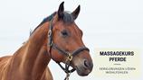 Massagekurs Pferd - Oktober 2020