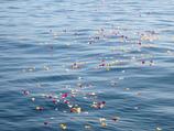 宇宙葬と海洋散骨(セットプラン)