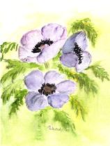 Anemonen