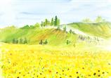 Landschaft / Sonnenblumen