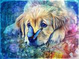 Hund mit Schmetterling