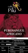 PUROSANGUE AFRICANO