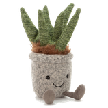 SILLY SUCULENT ALOE