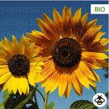 Sonnenblumen verzweigt