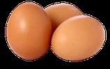 BIO-Eier im Karton