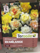 BULBES NARCISSES MELANGE X 20