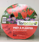BULBES PRET A PLANTER TULIPES ET CROCUS X 19