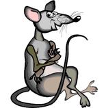 5 stk Ratten Frost XXL