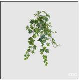 Edg Edera Cadente H.71 Verde