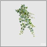 Edg Edera Cadente H.71 Verde/Bianca