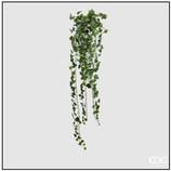 Edg Edera Cadente H.130 Verde