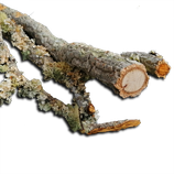 Kork-Vollholzäste ohne Befestigung zirka 150 bis 200 cm