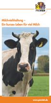 Milchviehhaltung - ein kurzes Leben für viel Milch