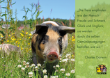 "Postkarte ""Tiere!"" - Zitat Charles Darwin"