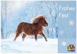 "Postkarte ""Frohes Fest"" - Pony"