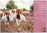 """Postkarte """"Zauber!"""" - Zitat Johann Wolfgang von Goethe"""