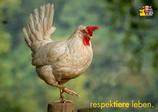 "Postkarte ""Henne - respektiere leben."""